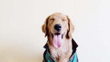 Ma  hoian ja jalutan su koera 10€ päev