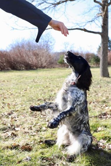 Ma treenin koeri